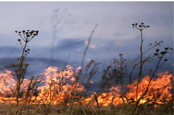 We Are Sauk Prairie series: Understanding Fire History on the Sauk Prairie