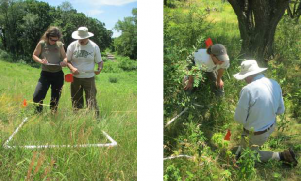 Citizen Science: Invasive Species Monitoring