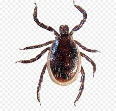 CANCELLED Program: Ticks and Tick-borne Diseases in South-Central Wisconsin