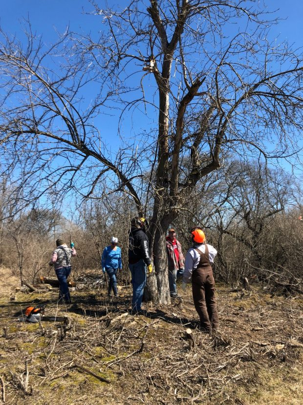 CANCELLED–Wild Apple Trees at Badger – pruning workshop